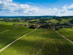 Mercurey Vineyard in Burgundy