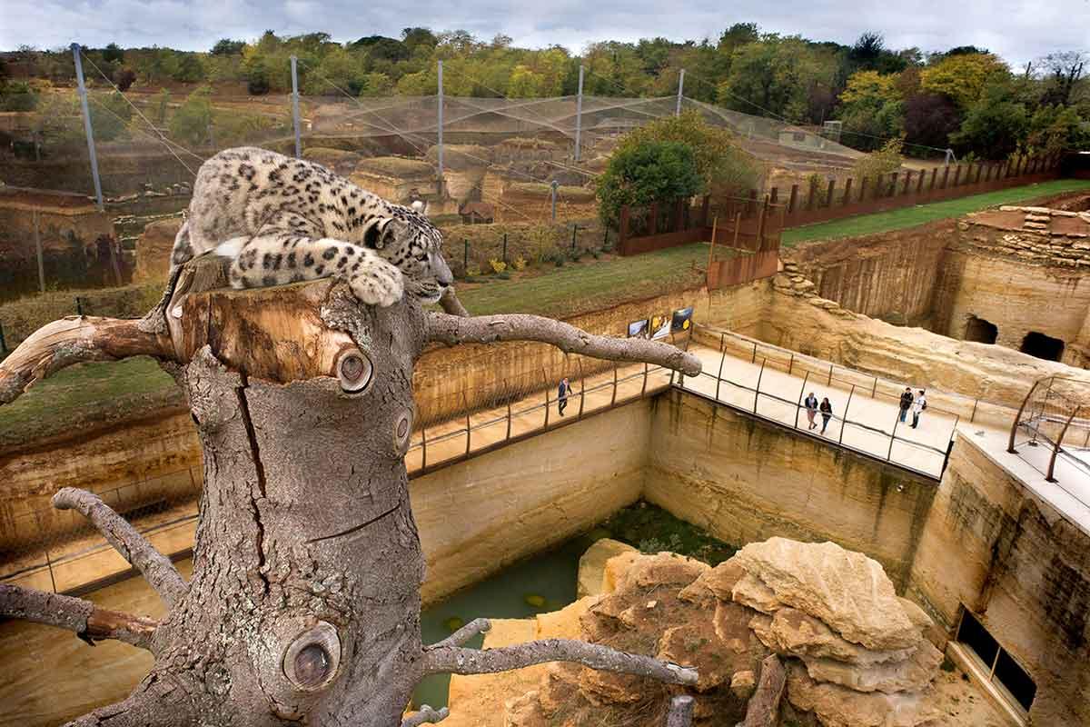 Camping Zoo Doué la Fontaine
