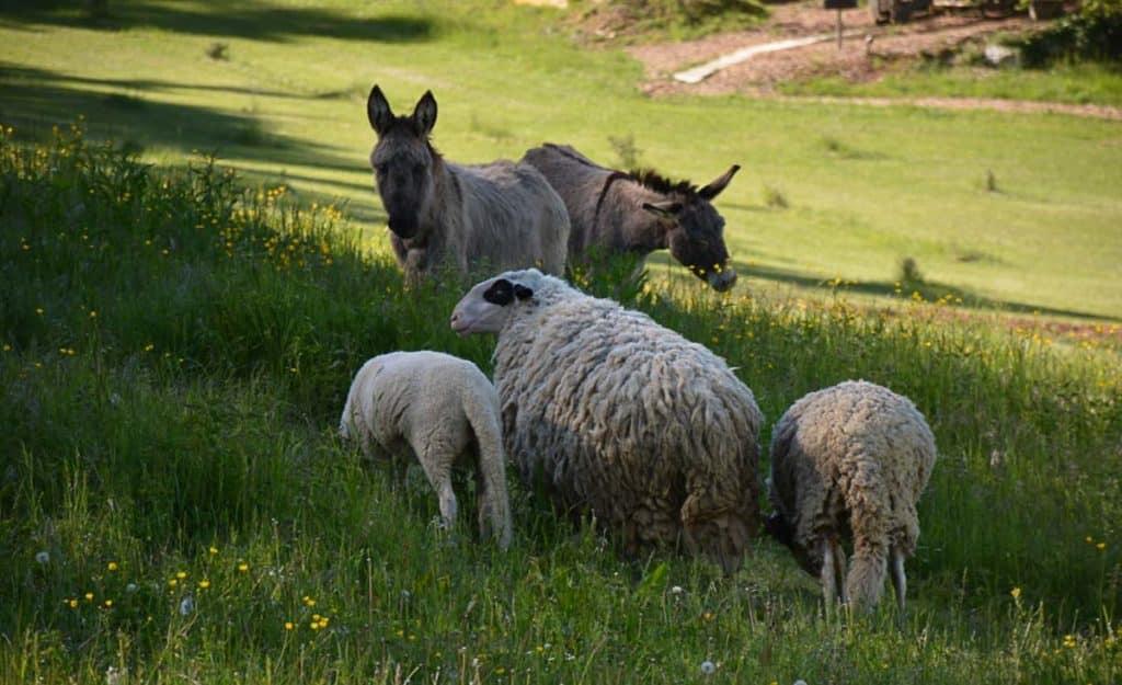 Camping Dordogne Périgord Vacances